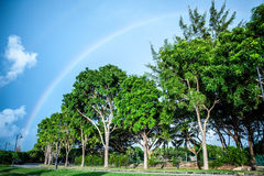 Rainbows in the beach. Rainbows looking beautiful background tree and cloud Royalty Free Stock Photo