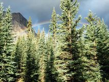 Rainbows over mountains. And pine trees Stock Photo