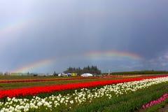 Rainbows at Tulip Festival spring time season Stock Image