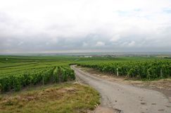 Rainclouds and French vineyard. Rainclouds over a green vineyard in Champagne, France Royalty Free Stock Photo