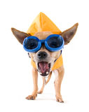 Raincoat and goggles Royalty Free Stock Photos