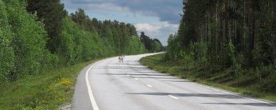 Raindeers crossing road, Sweden Royalty Free Stock Images