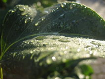 Raindops fotografia stock libera da diritti