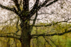 Raindroips on window with oak tree outside Royalty Free Stock Photo