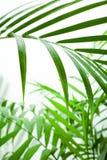 raindrop листьев стоковое изображение