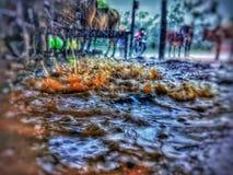 raindrop Στοκ Φωτογραφία