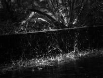raindrop image libre de droits