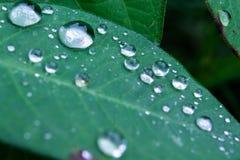 raindrop photo libre de droits