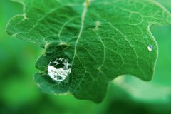 Raindrop. On a green leaf Royalty Free Stock Photography