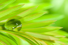 Raindrop. Leafs with raindrop, shallow DOF Royalty Free Stock Photos