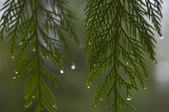 Raindrop 2. Closeup of rain on a leaf Royalty Free Stock Images