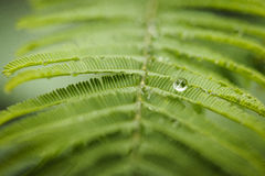 Raindrop. One single raindrop over a green leaf Stock Photography