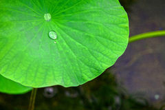 raindrop Fotos de Stock Royalty Free