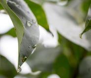 raindrop Fotografia Stock