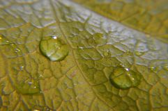 raindrop Photo libre de droits