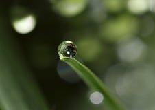 raindrop Obrazy Royalty Free
