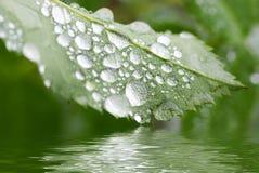 Raindrop Royalty Free Stock Photos