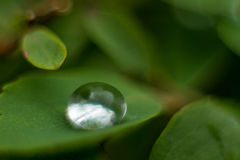 raindrop Foto de Stock Royalty Free