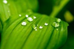 raindrop Immagini Stock