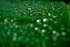 raindrop image stock