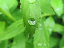 raindrop fotos de archivo