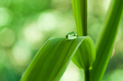 Raindrop on bamboo leaves Stock Image