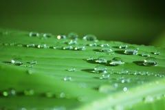 Raindrop on Banana Leaf Stock Photos