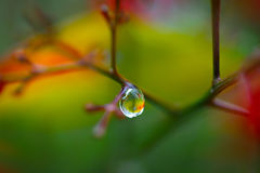 Raindrop on a branch with colorful background. Raindrop on a branch with a colorful background Stock Images
