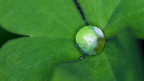 Raindrop on clover Royalty Free Stock Photography