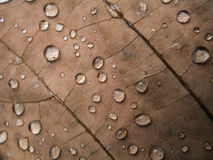 Raindrop on Dry leaf Royalty Free Stock Images