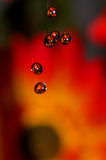Raindrop are falling. Waterdrop with flower reflections royalty free stock photos