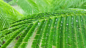 Raindrop on green leaf Royalty Free Stock Photography