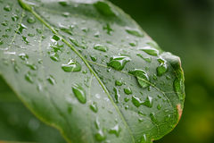 Raindrop on green leaf. Use for background Stock Photos