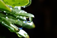 Raindrop on leaf Royalty Free Stock Photography
