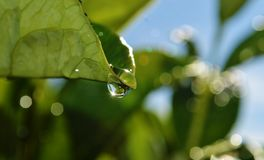 Raindrop on leaf Royalty Free Stock Images