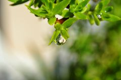 Raindrop on leaf Stock Photos