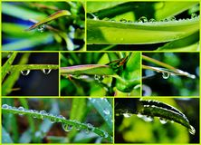 Raindrop on leaf Stock Image