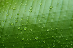 Raindrop on the leaf Stock Image