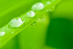 Raindrop Royalty Free Stock Image