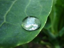 Raindrop on leaf. Macro Royalty Free Stock Image