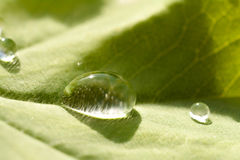 Raindrop on a leaf Stock Images