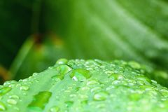 Raindrop. On leaves grass green fresh with nature background Royalty Free Stock Photo
