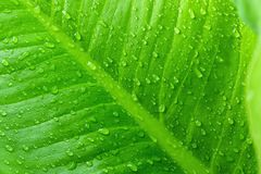 Raindrop. On leaves grass green fresh with nature background Royalty Free Stock Photos