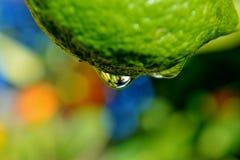 Raindrop on lemon Stock Photo