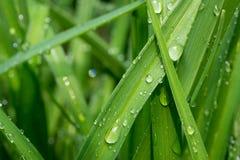 Raindrop Macro Stock Photos