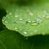 Raindrop Plateau obraz royalty free