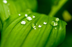 Raindrop Stock Images