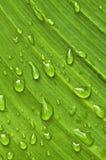 raindrops листьев предпосылки зеленые Стоковые Изображения RF