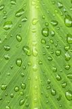 raindrops листьев предпосылки зеленые Стоковые Фото