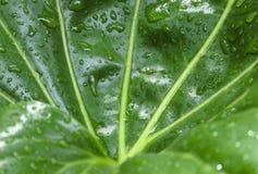 raindrops листьев Стоковые Фотографии RF